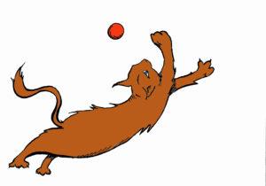 cat-soccer-copy