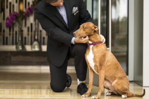 Four Seasons Hotel Atlanta puts your pet's name on a sandwich board by the valet, so they'll feel welcome from the first moment.