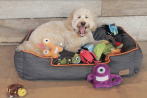 The office stocks plenty of toys to keep canine guests like Molly entertained.