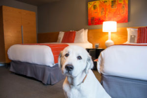Provenance Hotels in Portland, Oregon have creative amenities for your pet.