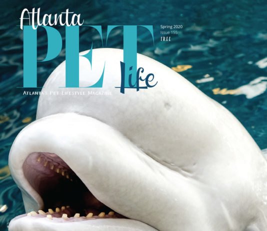 Animal Attractions - Atlanta Pet Life Cover story