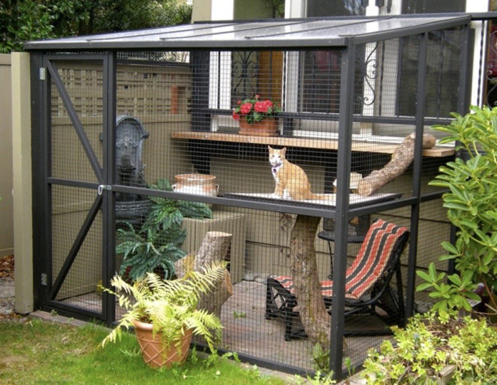 Should cats be indoors or outdoors?