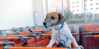 Home Depot is a great place for pooches and their owners to tackle spring projects together.