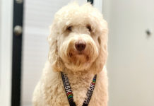 Service dog becomes social media hit