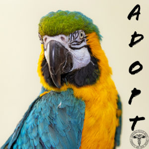The nonprofit Papayago Rescue House formed in 2015, but its founders have been assisting pet bird rescue since 2004.