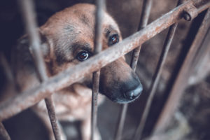 Protect Animal Cruelty and Torture Act